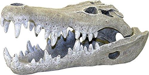 Rosewood - Calavera de cocodrilo del Nilo para Decorar Acuario